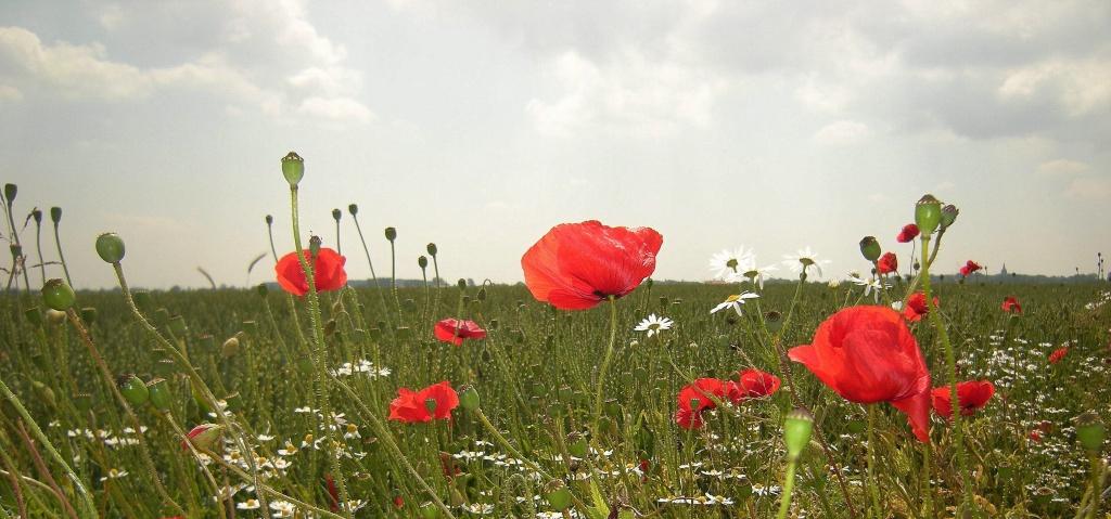 The weed verge  by pyrrhula