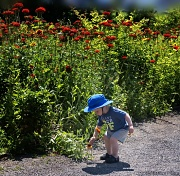 7th Jul 2012 - The Little Boy Who Adores Flowers