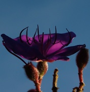 8th Jul 2012 - Purple - Thumbnail challenge