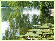 8th Jul 2012 - The Great Ouse,St.Neots