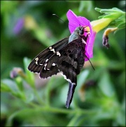 8th Jul 2012 - A new butterfly