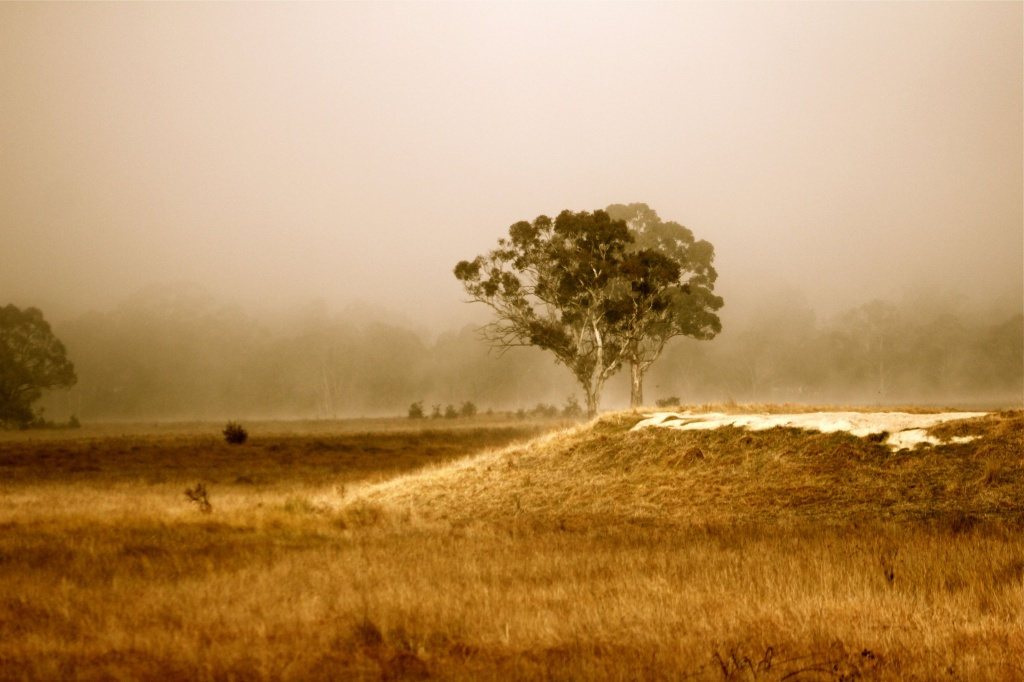 Early Morning Mist by purdey
