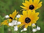 9th Jul 2012 - Wild flowers.