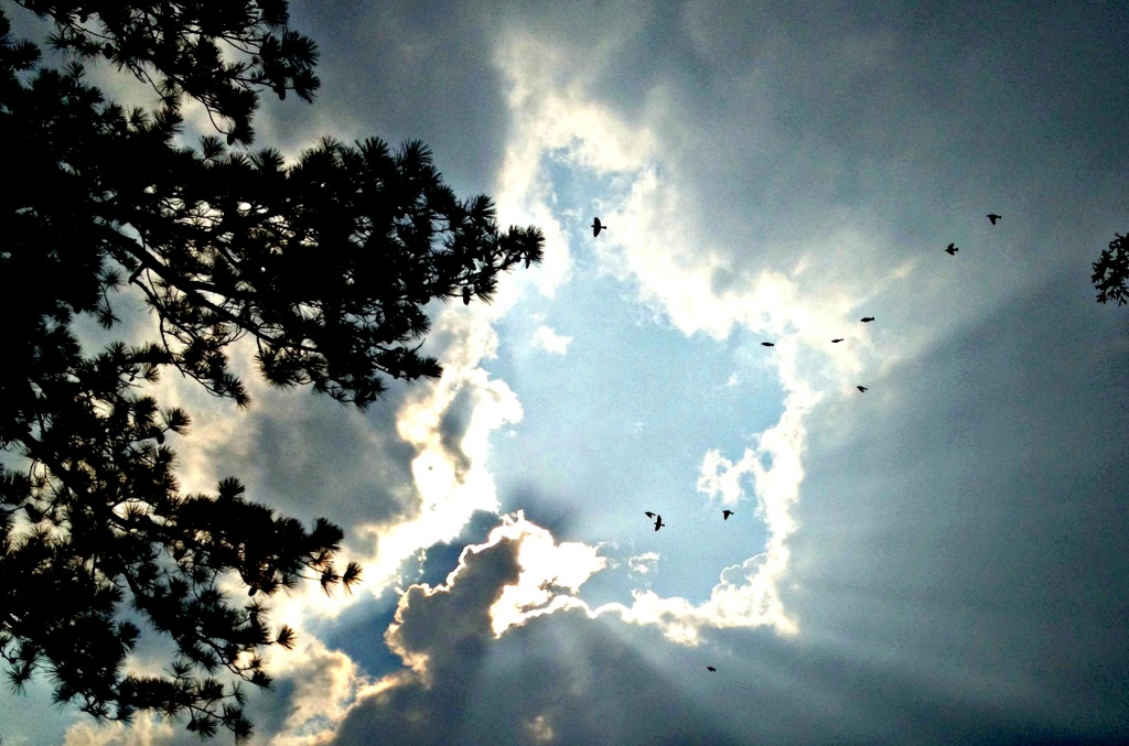 They Flew Into The Light by moonshadow