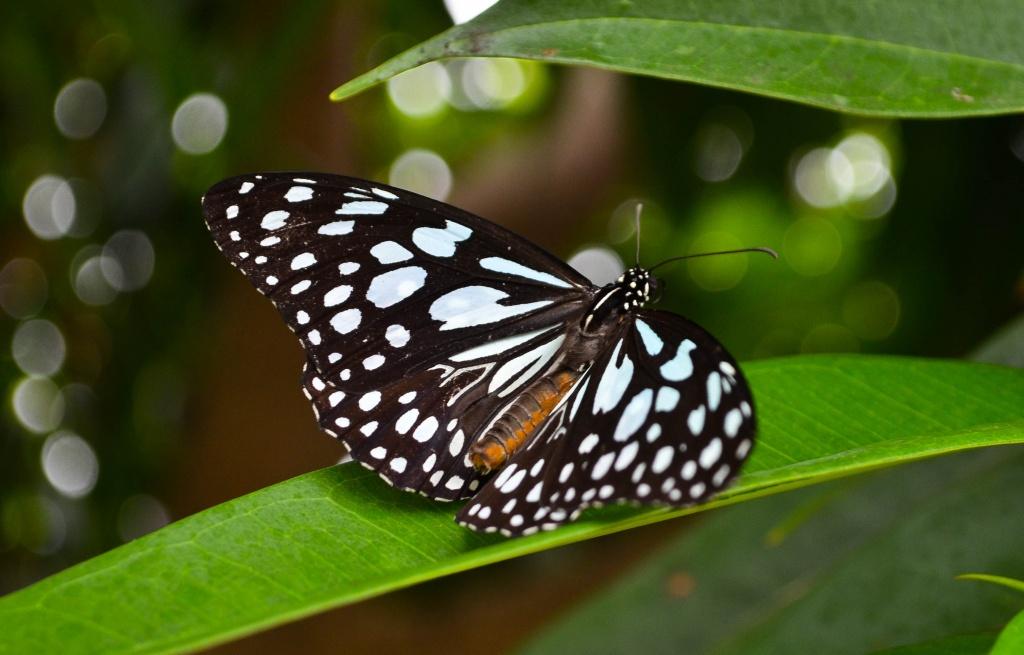 Twinkling Butterfly by lesip