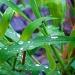 Summer Memory #28:Rain Rain Go Away by dmrams