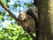 10th Jul 2012 - Squirrely guy.