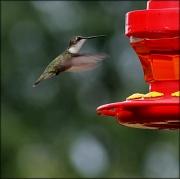 10th Jul 2012 - Rain and hummingbirds  Life is good today!