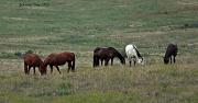 10th Jul 2012 - Horses in pasture