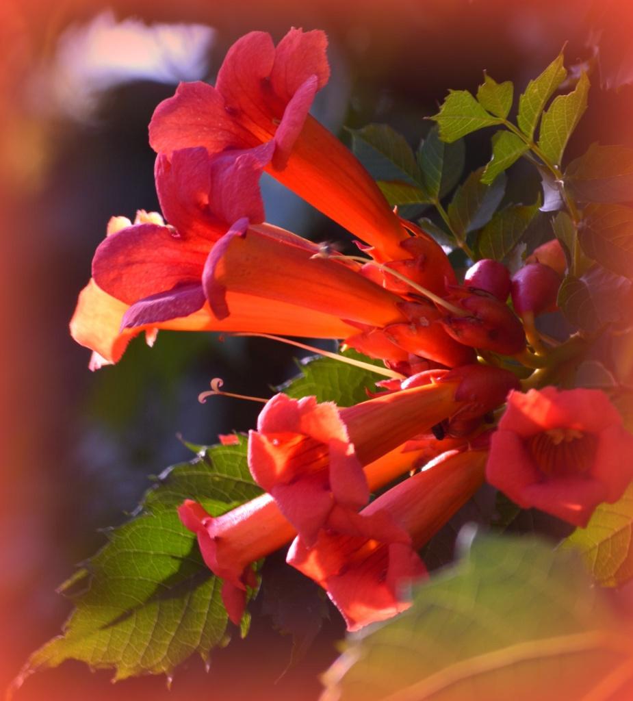 Wallace Lake trumpet flowers083 by myhrhelper