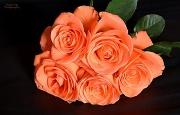 13th Jul 2012 - 5 Roses
