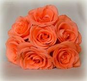 15th Jul 2012 - 7 Roses
