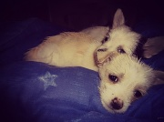 15th Jul 2012 - puppies