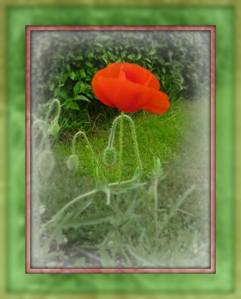 Poppy at No 3 by sarah19