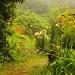 Summer Garden in the Mist by jgpittenger