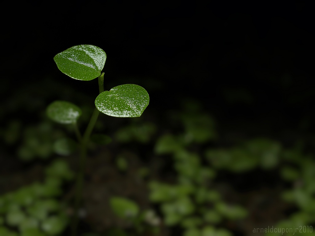 Day 16 - Tiny Plant by nellycious