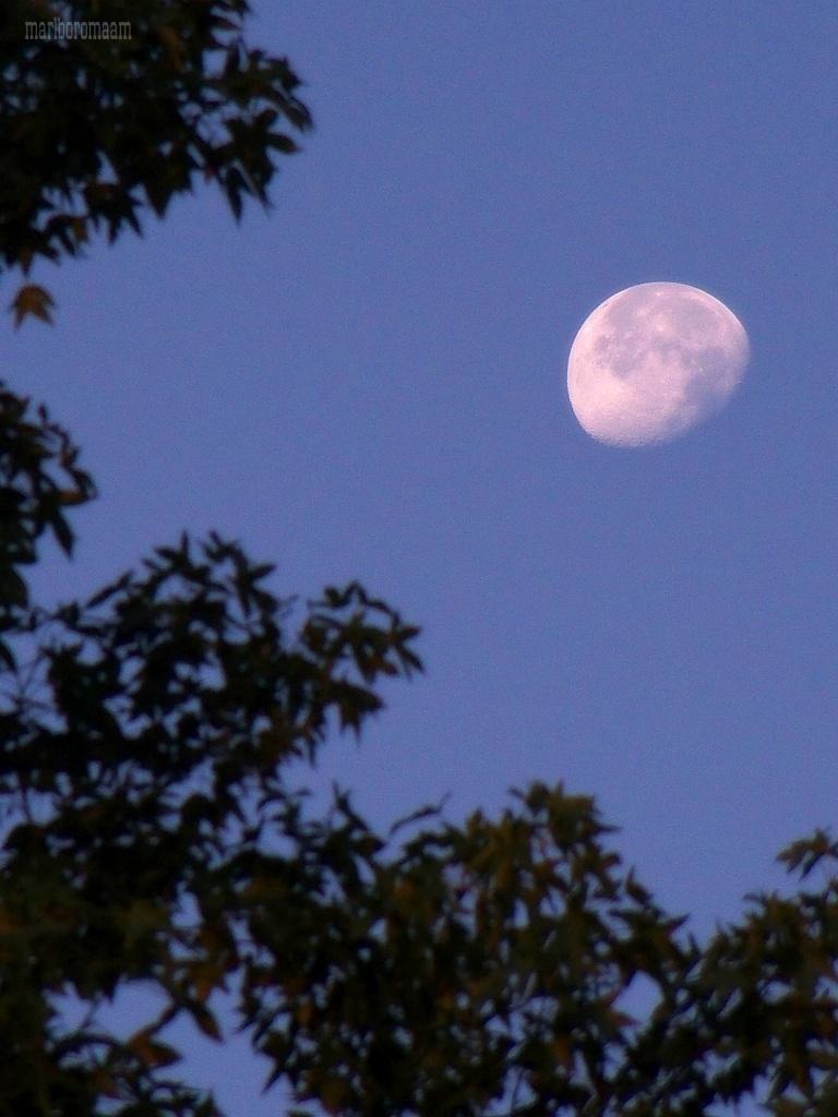 Early evening moon... by marlboromaam