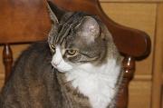 18th Jul 2012 - Rescue Cat