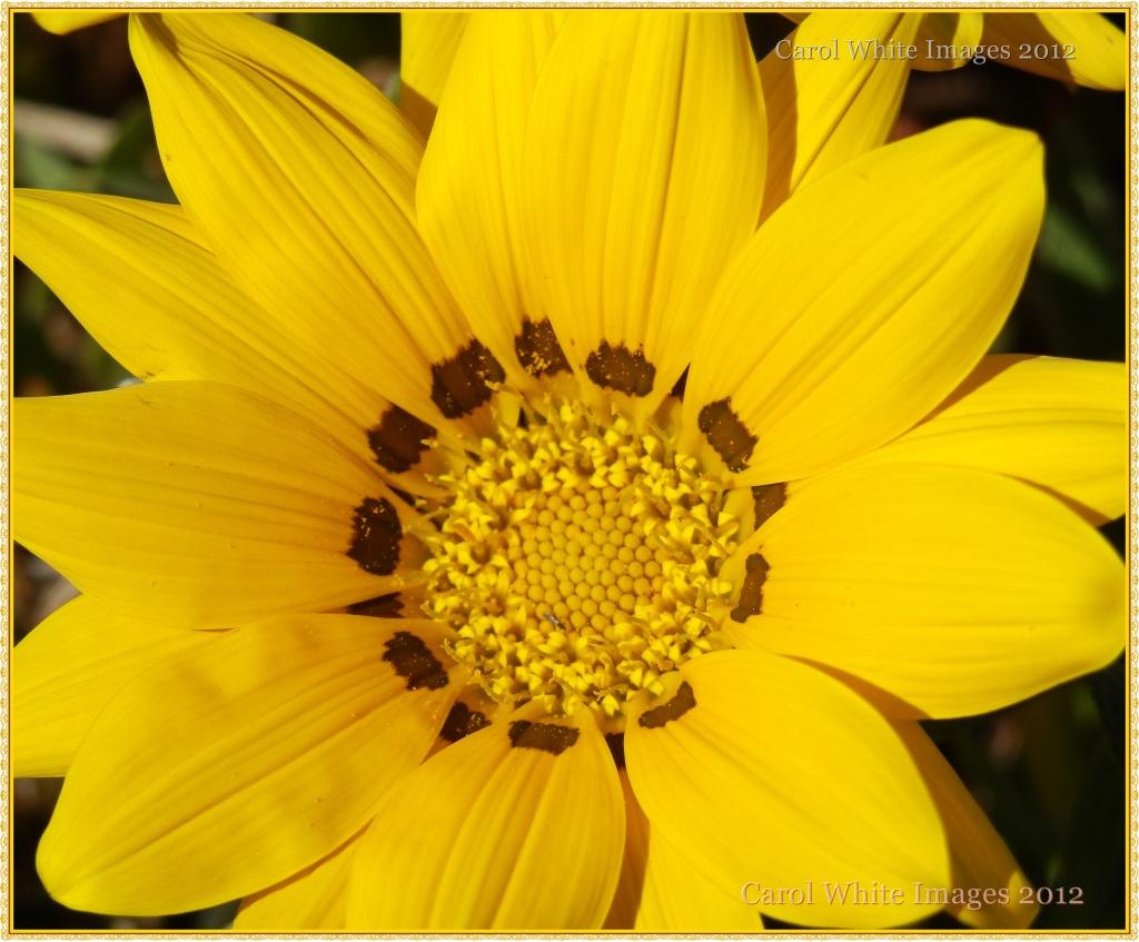 Bring On The Sun by carolmw
