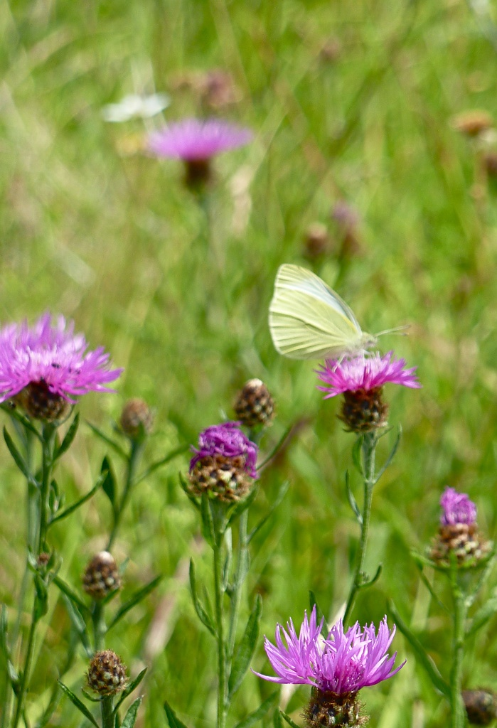 Ghost Butterfly  by helenmoss