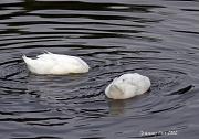 20th Jul 2012 - Peeking Ducks