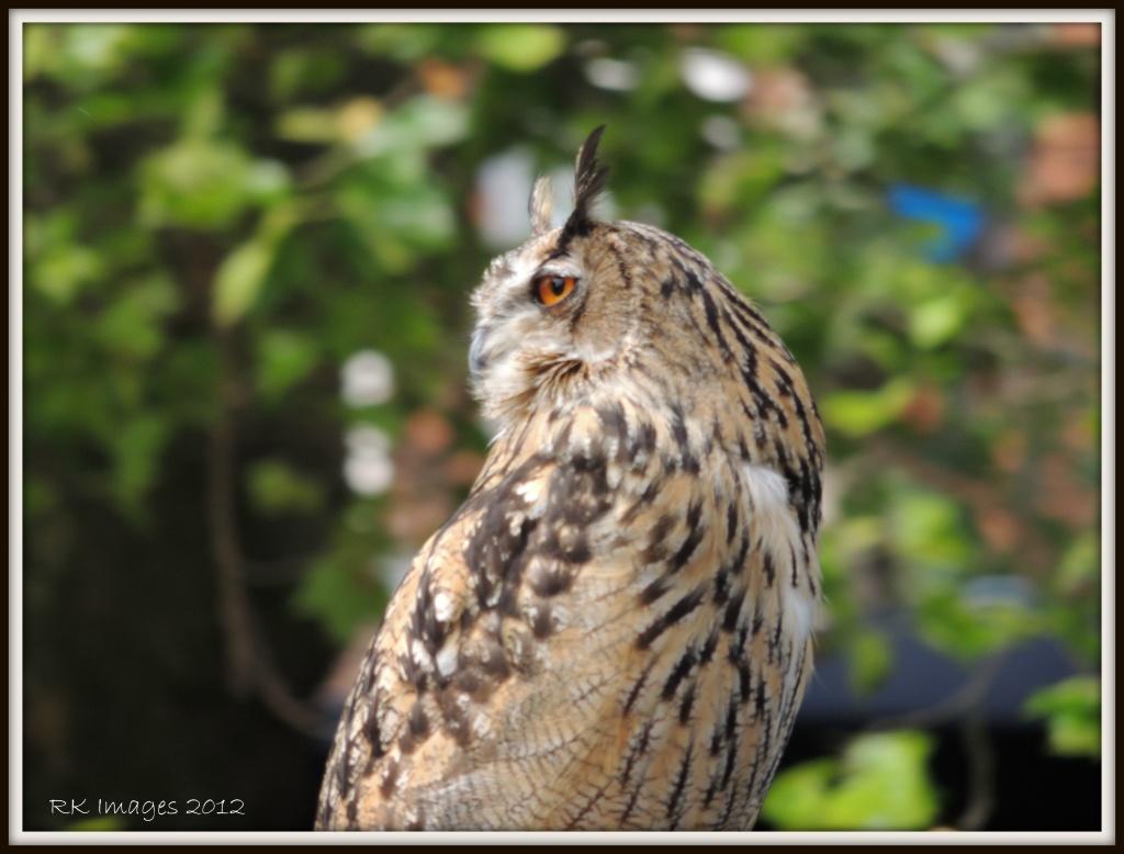 Ozzie Owl by rosiekind