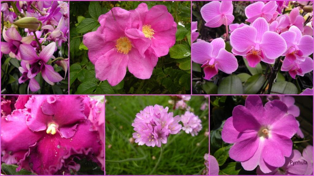 Pretty in pink by pyrrhula