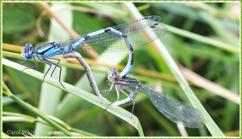Mating Season by carolmw