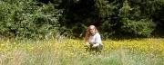 23rd Jul 2012 - dandelions