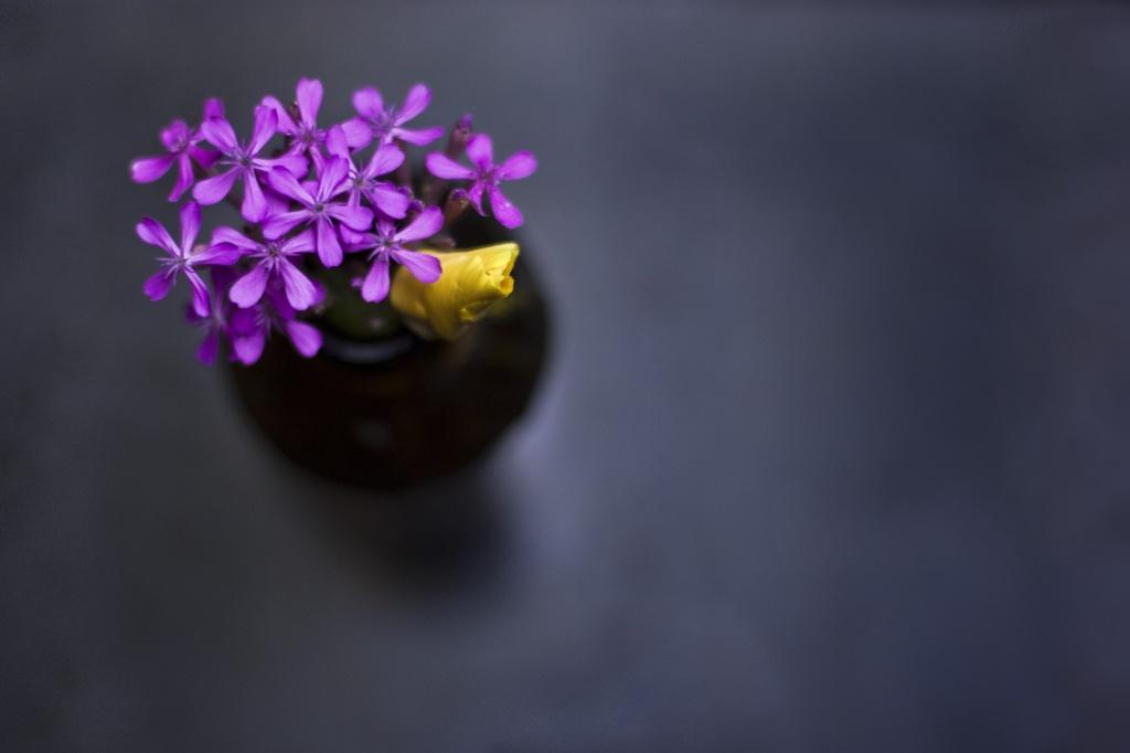 Flowers in a bottle by kiwichick