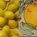Lemons by allie912