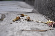 2nd Jul 2010 - Withered flowers