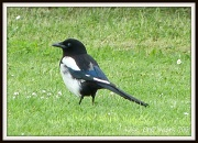 25th Jul 2012 - One for sorrow