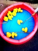 3rd Jul 2010 - Hook-A-Duck