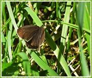 27th Jul 2012 - Butterfly