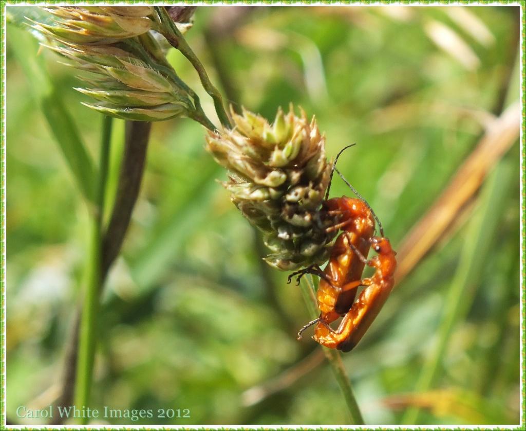 Busy Bugs by carolmw