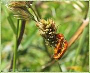 28th Jul 2012 - Busy Bugs