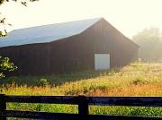 29th Jul 2012 - Filtered Sunlight