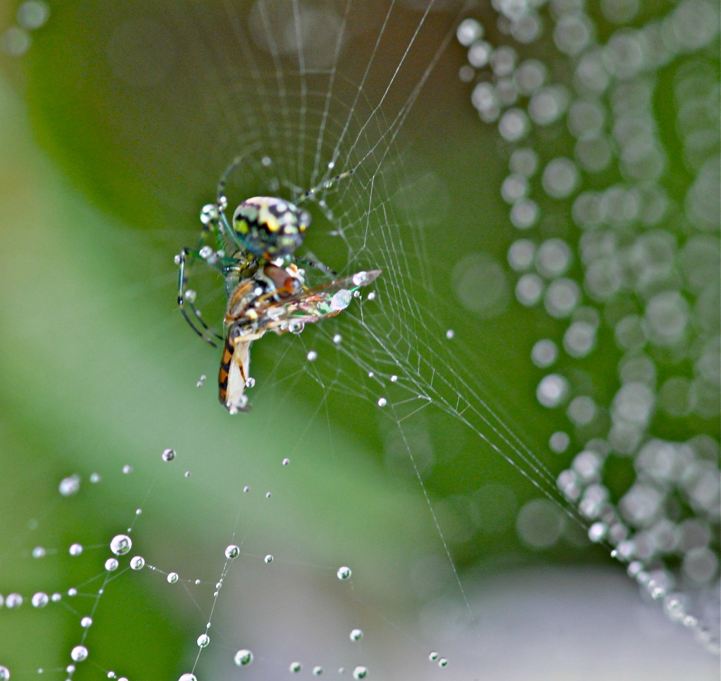 Spider and his dinner.................. by sailingmusic