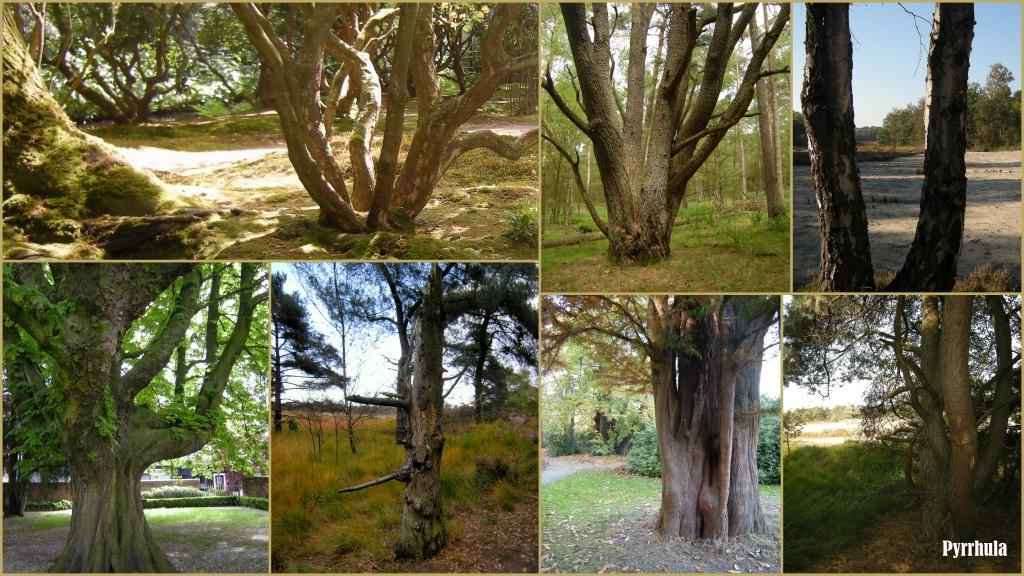 Tree trunks  by pyrrhula