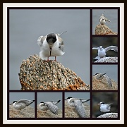 "30th Jul 2012 - ""My tern (turn) for flying practice"