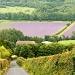 lavender fields forever by peadar