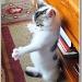 Kung Fu Kitten by carolmw