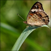 1st Aug 2012 - Folded wings