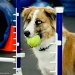 Agility by danette