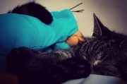 3rd Aug 2012 - My Cat Has A New Friend!