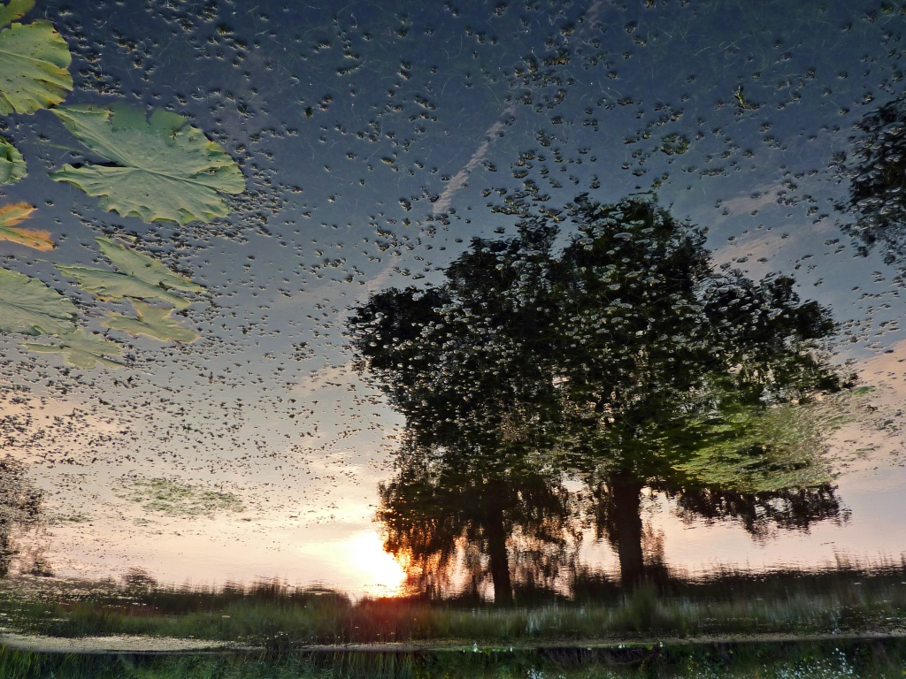 Inverted Pond Reflection by phil_howcroft