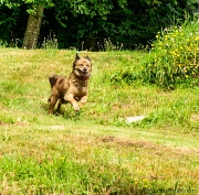 7th Aug 2012 - Cayenne Running to See Me