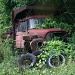 Truck being consumed by nature by mittens