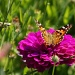 Butterfly and Grasshopper by rob257